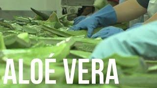 Les Bienfaits de l'Aloe Vera