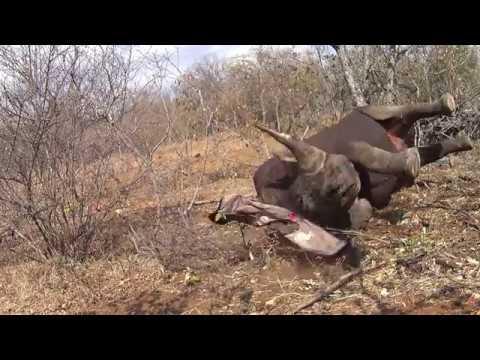 Black Rhino Breaks Horn
