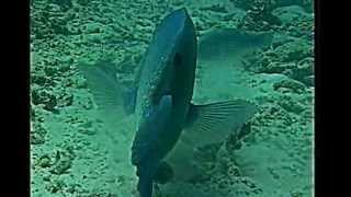 SCIENZE la vita sulle barriere coralline