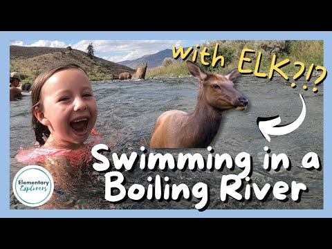 Swimming in the Boiling River with Elk! - Yellowstone National Park - Mammoth Campground