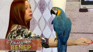 Какого попугая завести дома
