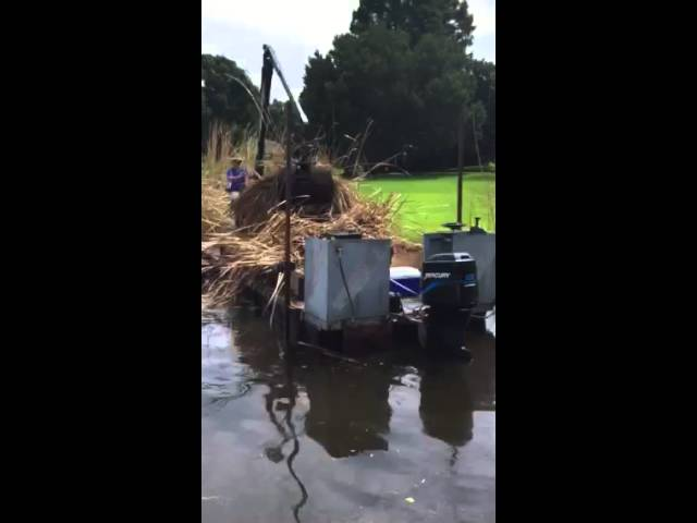 Cattail Removal