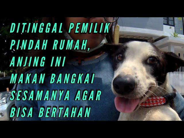 Rescue : Ditinggal Pemilik Pindah Rumah, Anjing Ini Makan Bangkai Kawannya Demi Bertahan Hidup