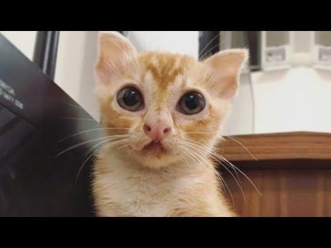 Прикольный котенок уникальной мордочкой за 30 июля