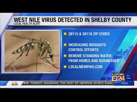 West Nile Detected In Zip Codes 38115 & 38118 In Shelby County