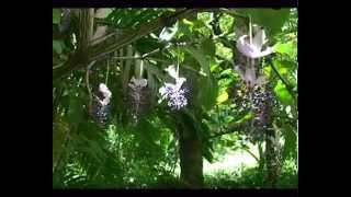 Hilo, Hawaii. Tropical Botanical Garden
