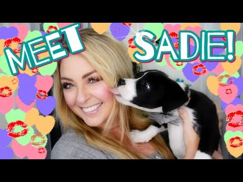 We Got A Puppy: Meet Sadie! The Lab Pit Husky Boxer!!