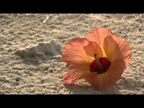 Maldives Scattering Diamonds HD Video