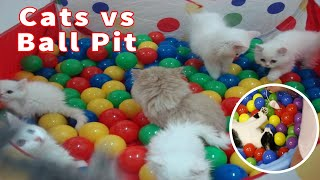 Cute Kittens Play in Ball Pit & Cats vs Ball Pit animal lovers  2020 Part 2