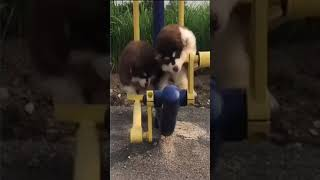 funny animal dog and cat videos #short