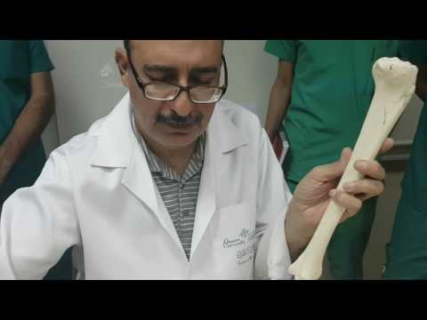 Anatomy  Tibia + Fibula Dr.Khalid