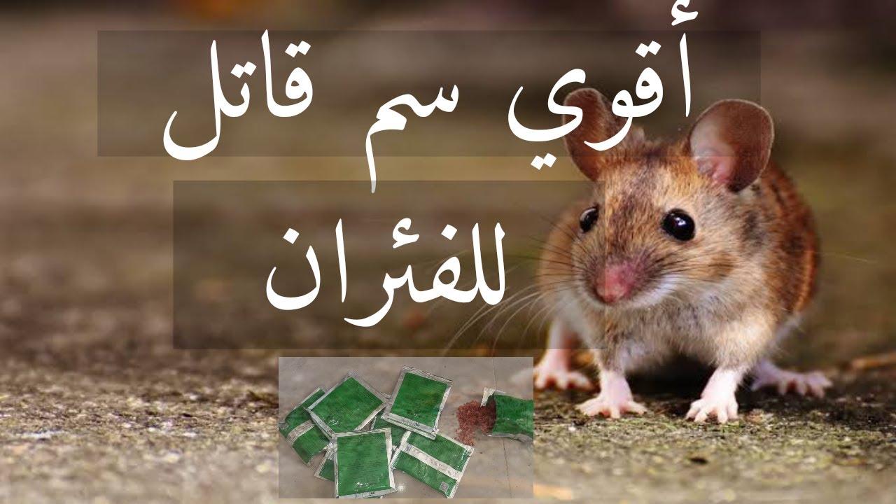 اقوي سم للقضاء على الفئران تماما سم قاتل للفئران Youtube