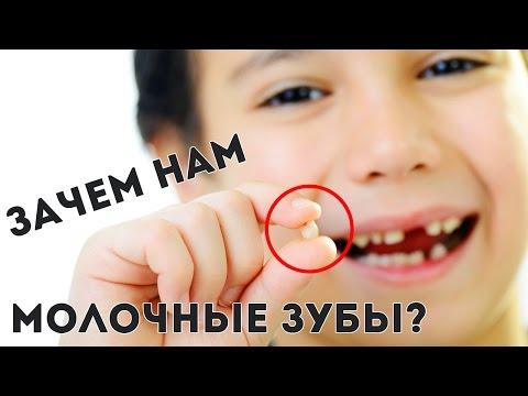 В каком возрасте и в каком порядке выпадают молочные зубы