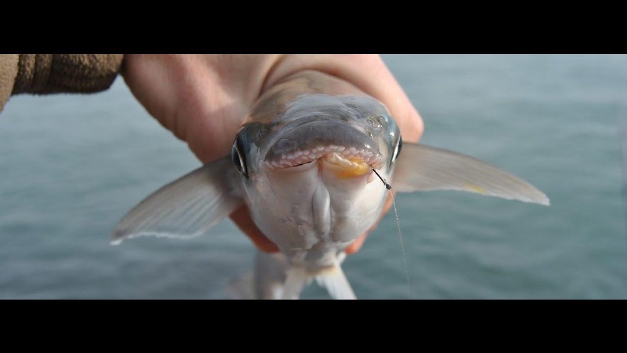 Kefal Balığının Lezzetli Olduğu Zamanlar