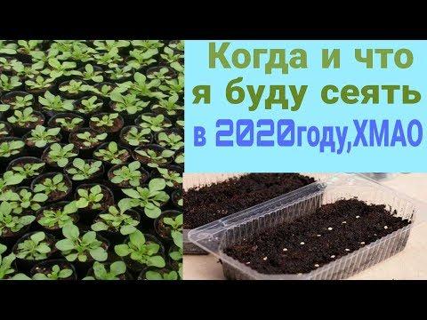 Мои сроки посева на 2020 год. Ханты-Мансийский округ.