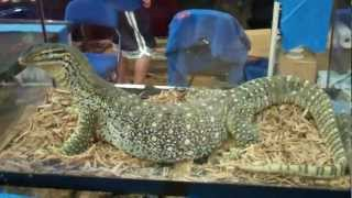 White Plains New York Reptile Expo 7/8/12 (Part 2/3)