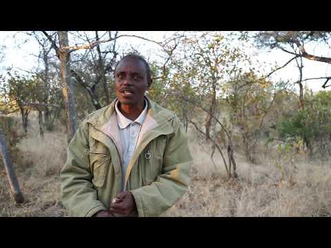 Savory Global Success Stories - Zimbabwe