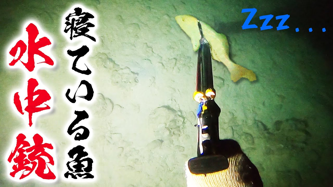 【素潜り】水中銃で睡眠中の魚を一刺しにする【久高島遠征2021夏 #2】