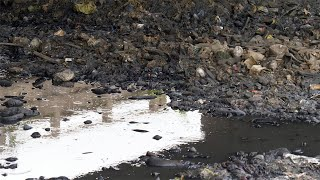 Toxic water flowing at a garbage dump polluted by mankind in India - environment concept
