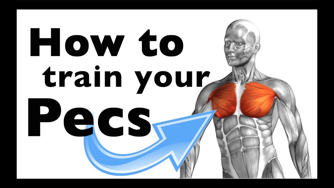 How to: Train your Pectoralis major & minor (+15 gym