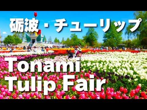 Tulips Festival Japan 富山「となみチューリップフェア」花の名所 花見頃 砺波観光