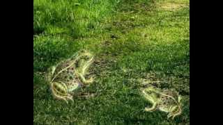 Лягушка и вол. Басня И. Крылова