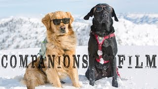 Companions Film: Adventure Dogs Skiing the Backcountry