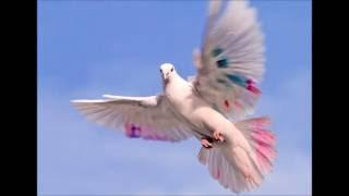 Fly Video Version 2 - Dan Pharoah ©2016