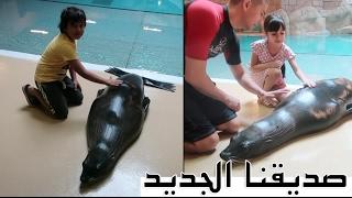 صورنا مع الدلافين و أسد البحر || Our New Friend