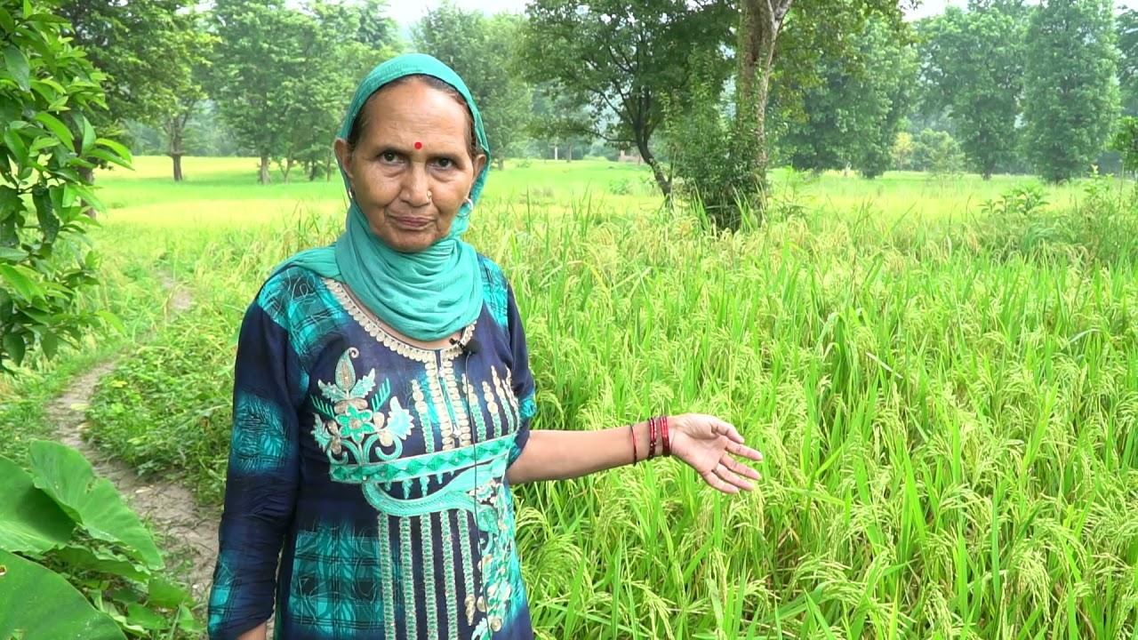 Rait Block, Kangra  Farmers experience in SPNF #NaturalFarming #Agriculture #ZBNF #SPIU #ATMA