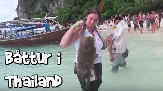 galna apor i thailand viafree avsnitt 5