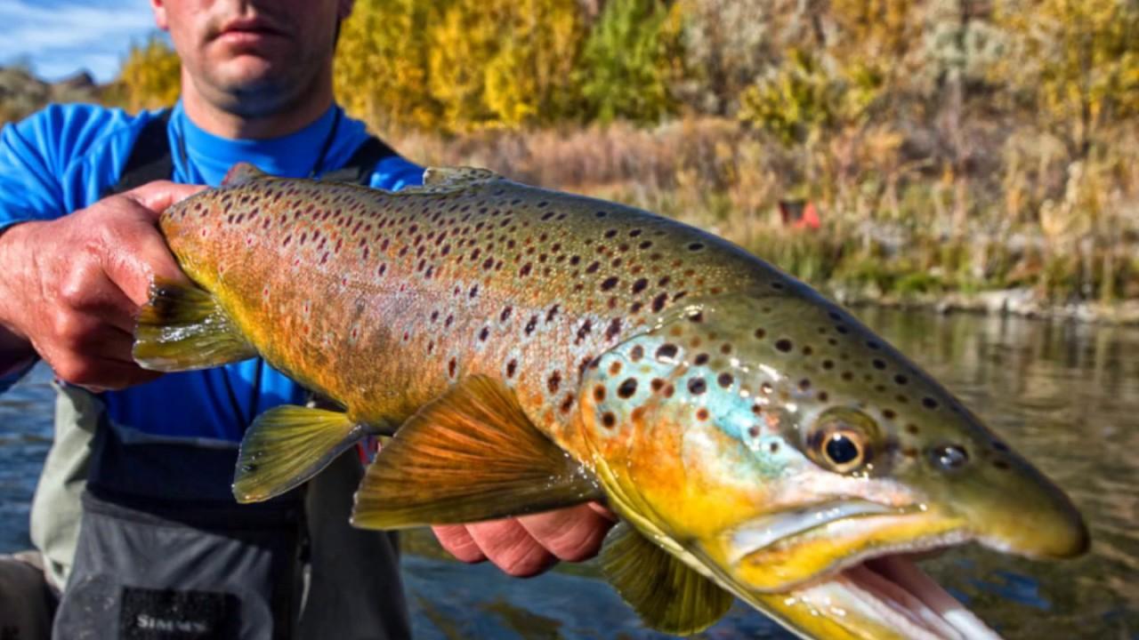 owyhee river fishing report Fly Fishing Report Owyhee River 10 27 - YouTube