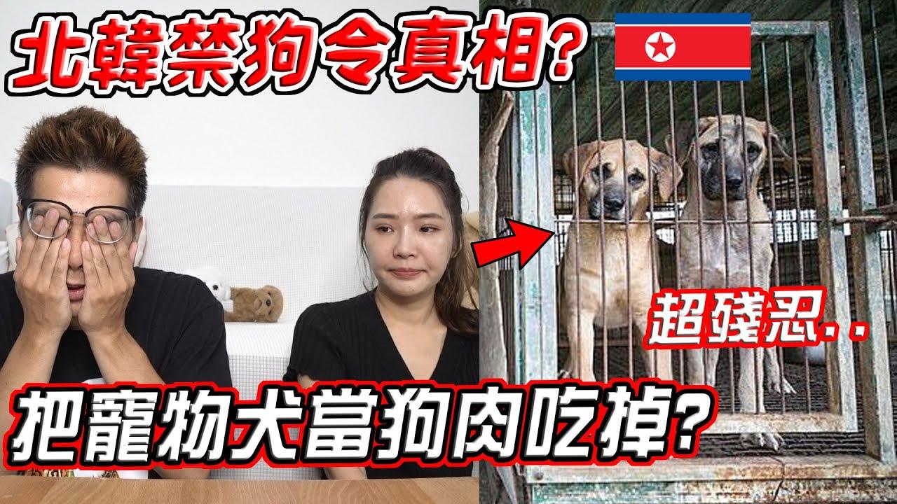 北韓禁狗令真相?竟強制把寵物犬賣到狗肉店吃掉?!金正恩:養狗就是「沾染資本主義思想」【希露弟弟啃雞腿】