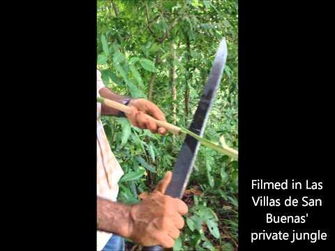 Costa Rica Jungle Medicine for Kidney Health