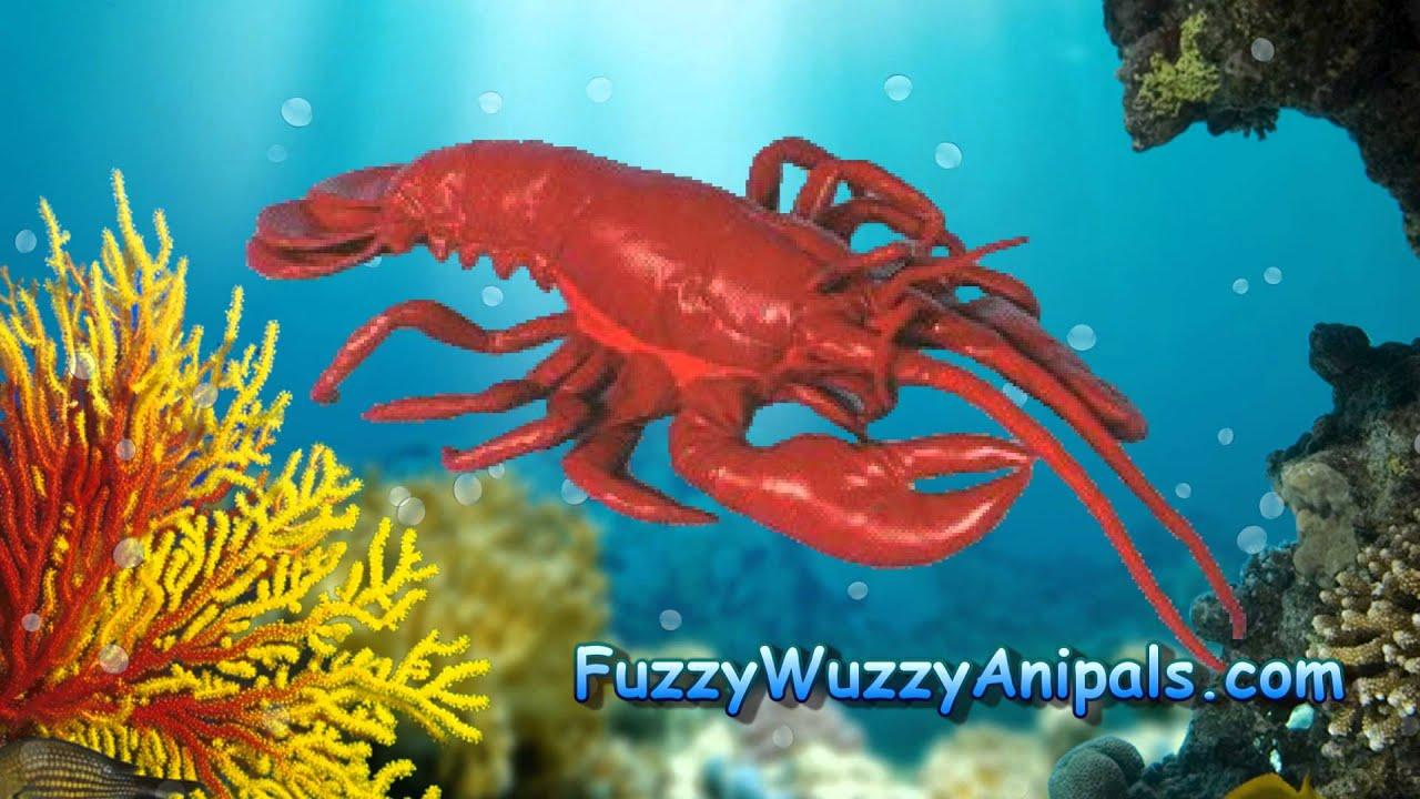 Red Lobster Life Like Stuffed Animal Youtube