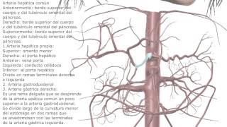 Tronco Celiaco