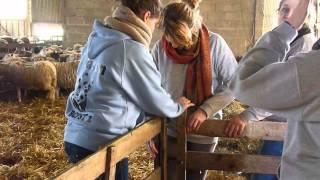 moutons - Attrap'mouton 2