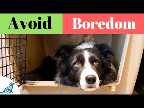 Activities For Dogs On Crate Rest - Professional Dog Training Tips