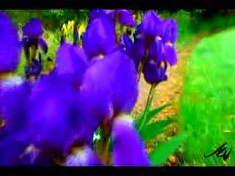 British Country Garden Flowers