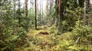 Camouflage test: Multicam versus DPM 3