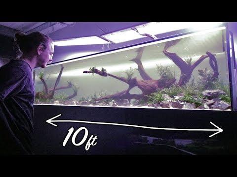 Aquascaping my BIGGEST Aquarium Yet