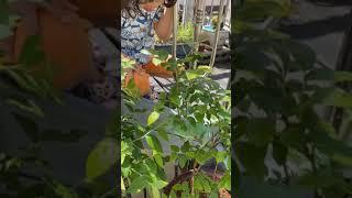[진지Tube] 진진박사와 애용박사의 카멜레온 일광욕 …