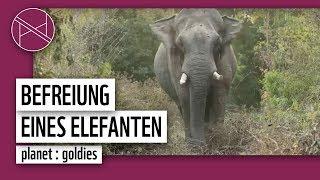 Elefant wird aus Wilderer-Falle befreit | WWF weltweit | WWF Deutschland