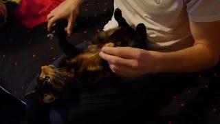Как легко подстричь кошке когти ))