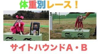 2015年3月7日 体重別レース! サイトハウンドA・B カテゴリー BLCC ル...