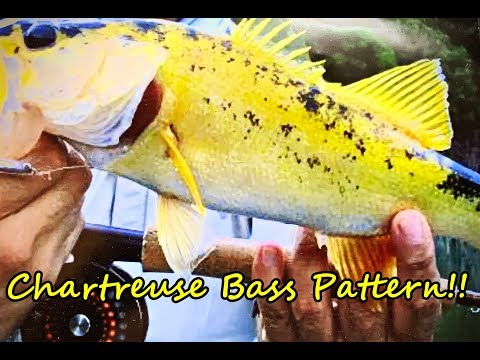 All New Spray Session:The Chartreuse Bass from YouTube · Duration:  24 minutes 25 seconds