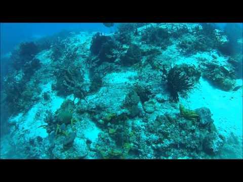 Cozumel 2012, Dive #6