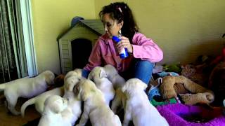 Puppy Treat Training '' Do Not Tossle Their Ears!!''
