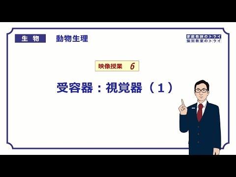 【高校生物】 動物生理6 受容器:視覚器(1)(24分)