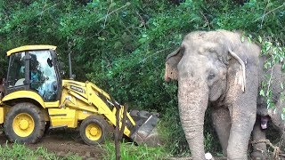 Wild elephant captured from Dambulla ( Part 1) thumbnail